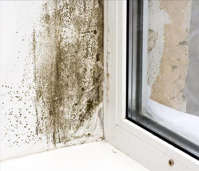 Black mold patches on a wall by a window with a lot of moisture