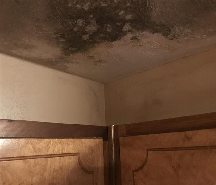 Top of kitchen cabinets and corner of ceiling.  Significant mold growth on ceiling