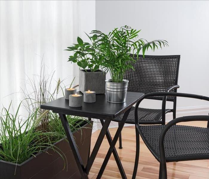 house plants on a folding table