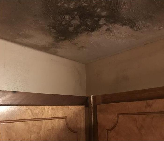 mold damage on ceiling and walls above cabinets